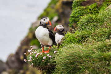 Two puffins standing on the edge of a cliff