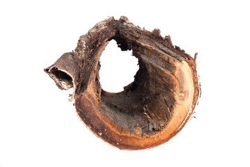 stump with a hole in the center isolated on a white background