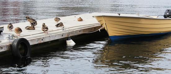 Ducks sit marina