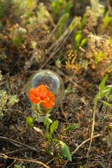 Light bulb with flower inside on grass background.