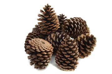 Pile pines