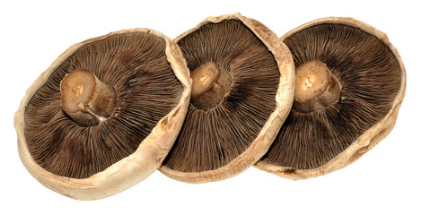 Large Flat Mushrooms
