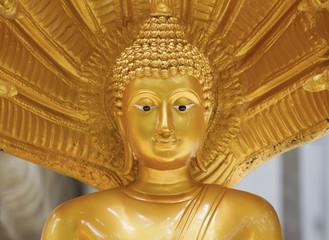 Buddha in Thailand temple