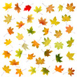 Set of falling autumn maple leaves on white background.