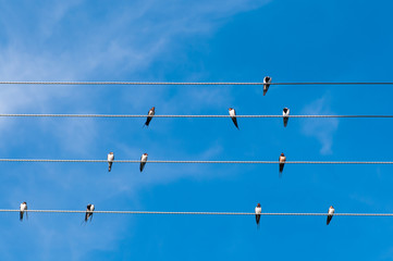 Swallows on wires under a blue sky