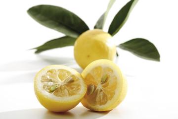 Limequats (Eustis Limequat)