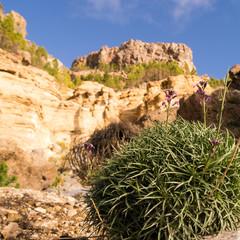 Felsen im Teide Nationalpark auf Teneriffa
