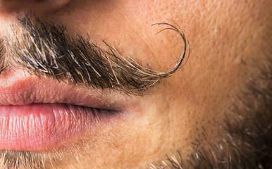 Mustache macro shot.