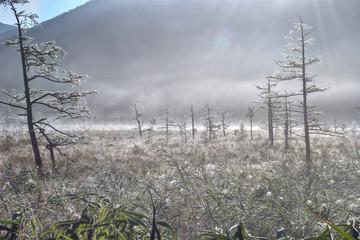 朝靄の戦場ヶ原