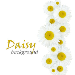 Daisy flowers arrangement