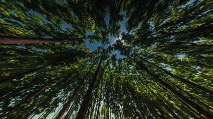 Indian forest wide angle time lapse