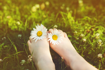 Child feet with daisy flower on green grass in a summer park. In