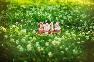 Happy New 2015 years on the green grass in summer park.