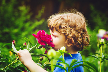 Child smelling bouquet of peonies, sun back lighting.