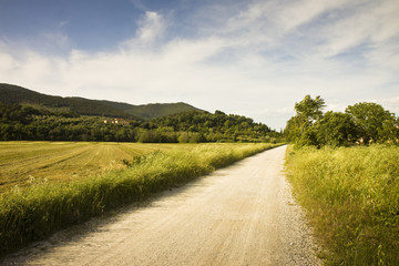 Pathway in Tuscany countryside - Italy