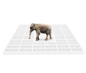 Elephant in a labyrinth.