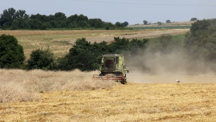 Agriculture - Combine (harvester) on the field.