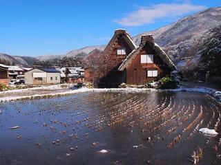 Shirakawago rice field