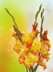 Gladiolus.Bouquet