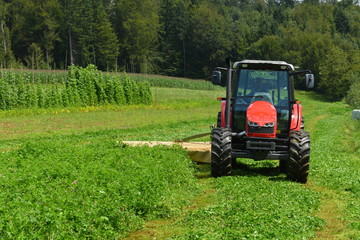 Organic farmer in tractor mowing clover field with rotary cutter