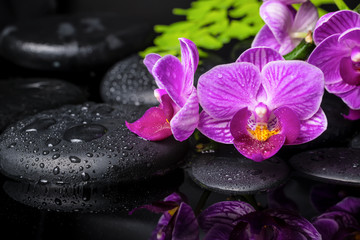 spa setting of stripped lilac orchid (phalaenopsis), branch of f