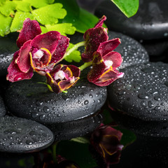 spa setting of zen stones with drops and blooming twig of dark s