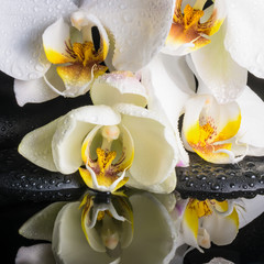 Beautiful spa setting of white orchid (phalaenopsis), green bran