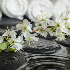 Spa set of blooming fresh twig plum on zen stones and white towe