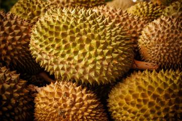Durian season in Malaysia