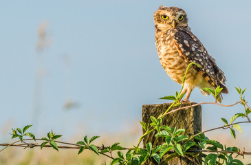 Owl resting on the wooden with plants