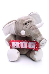 Plush elephant on white background