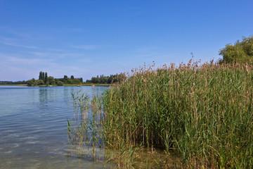 Insel Reichenau - Landschaft am Bodensee 2