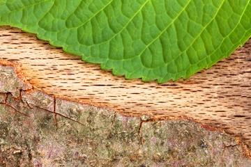 blatt und Baumrinde