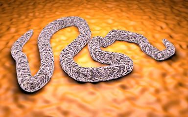 Virus ebola al microscopio pericolo contagio epidemia