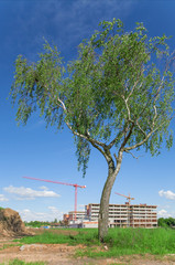 Birch and unfinished building, crane