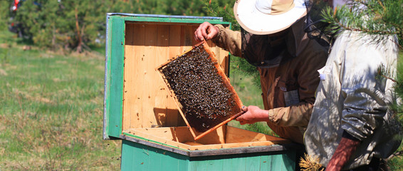 Beekeepers checking a beehive