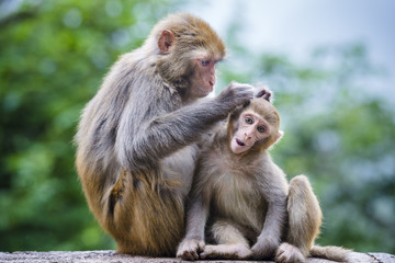 Macaques in Guiyang, China