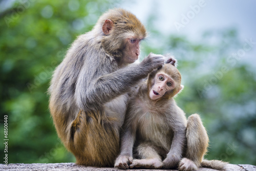 Papiers peints Chine Macaques in Guiyang, China