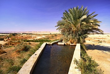 Spring of water near Dakhla oasis