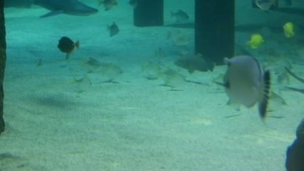 vie sous marine