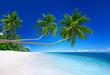 Tropical Paradise with Coastline Background