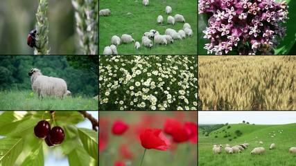 Nature composition multi screen