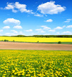 Spring landscape with dandelion field and blue sky