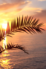 Palm Leaf at Sundown