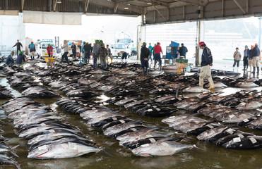 魚市場のマグロ