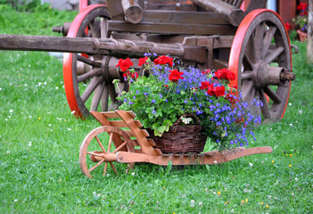 blooming plants and wooden wheelbarrow