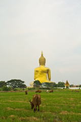 Big buddha statue at Wat Muang in Ang Thong province of Thailand