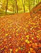Leinwanddruck Bild - Autumnal scene in the forest