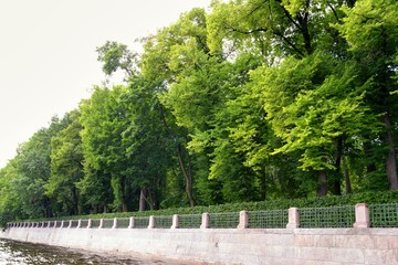 Embankment of the Saint Petersburg with beautiful tree