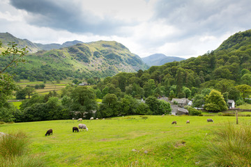Country scene Seatoller Borrowdale Valley Lake District Cumbria